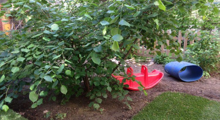 Gartensträucher